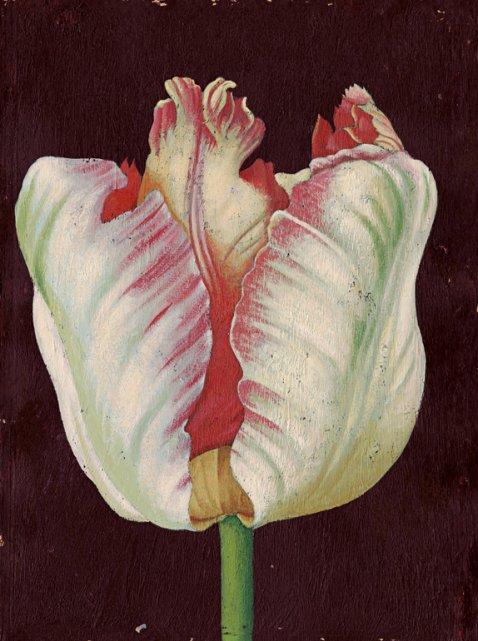 02 tulip